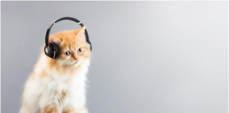 Music has a positive effect on animals